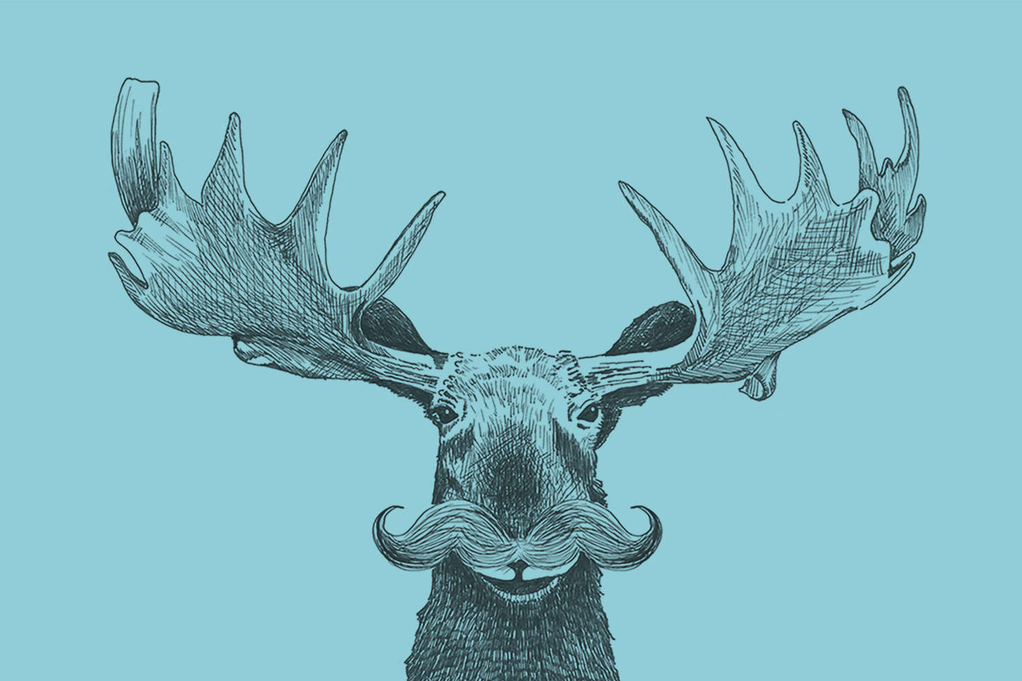 Hand drawn image of a creative moose head facing forward